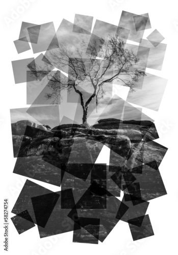 tree rock collage