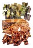 autumn park collage