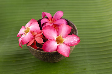 Red frangipani in bowl and banana leaf texture