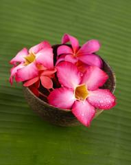 Three red frangipani in bowl and banana leaf texture
