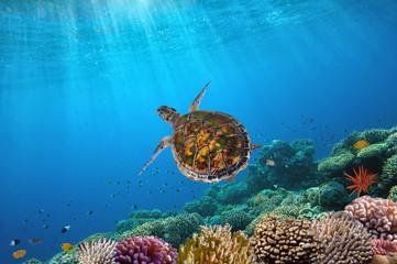 Ocean Underwater Background Image