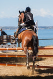 Dressage competitions