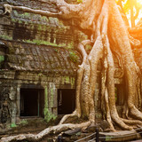 Giant tree covering Ta Prom temple, Siem Reap, Cambodia