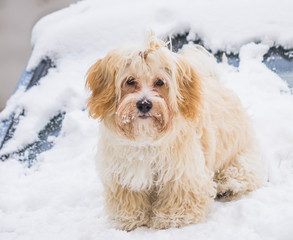 cute dog in snow