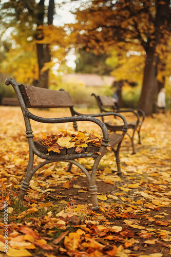 Autumnal park wihn bench. Focus on bench