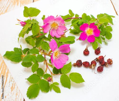 Веточки шиповника с цветами и его п
