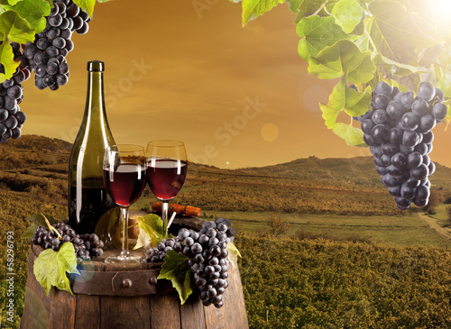 Wine in vineyard
