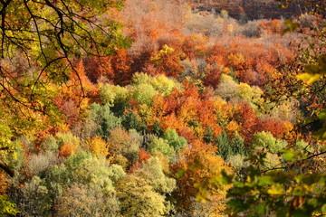 Mischwald im Herbst /Farbenfroh [kw-de]