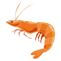 Shrimp isolated illustration