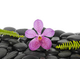 Macro of pink orchid with set of two green fern on pebbles