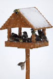 winter birds in animal feeder