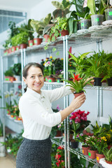 woman chooses Guzmania  at  shop