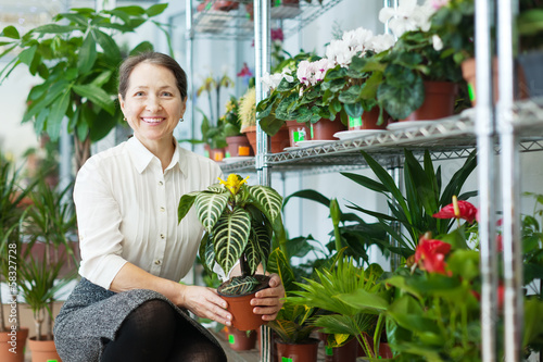 Happy mature woman chooses Aphelandra  at  shop
