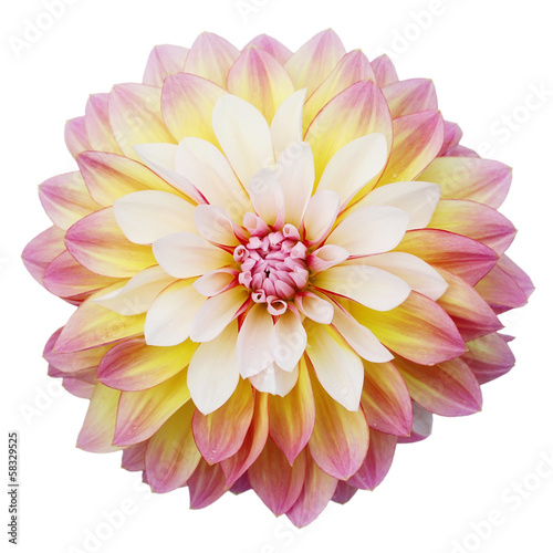 Foto op Canvas Dahlia Multi-coloured dahlia isolated on white background