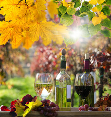 Weinprobe im Weingarten / goldener Herbst :)