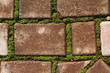 Green moss grows between bricks
