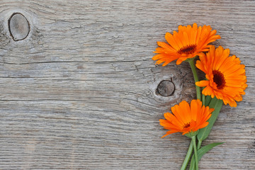 Three flowers of a calendula on an old wooden background