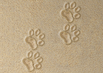 Four tracks of cat in the sand