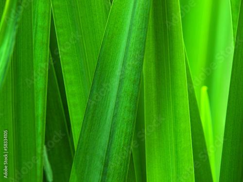 Fototapeten,ried,pflanze,klinge,natur