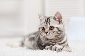 Cat on the carpet