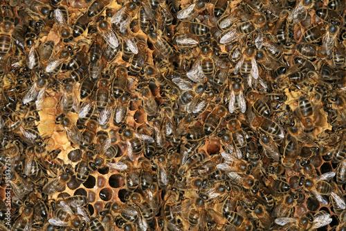 abeilles, ruches et essaim