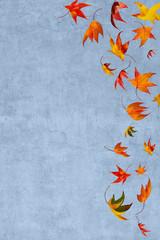 Isolated falling autumn leaves