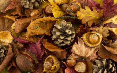 Autumn leaves and nuts