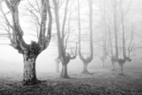 creepy forest with scary trees