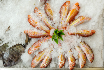 Fresh fishes seafood background on ice