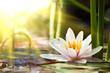 Leinwanddruck Bild - lotus flower