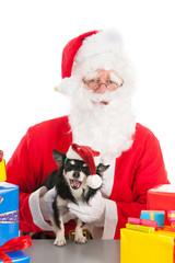 Little dog as gift for Christmas