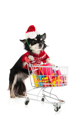 Dog shopping for Christmas