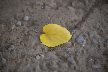 yellow leaf on the cold concrete
