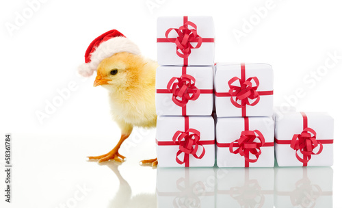 Foto op Canvas Kip Christmas chicken with presents