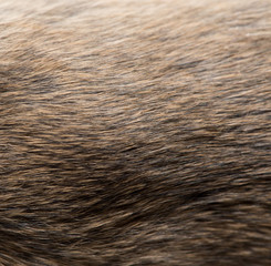 background of fur. texture