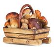 Fresh mushrooms in basket isolated on white
