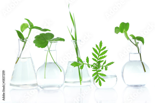 Plants in test tubes, isolated on white