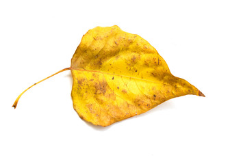 yellow leaf on a white background