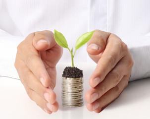 Businessman holding plant sprouting