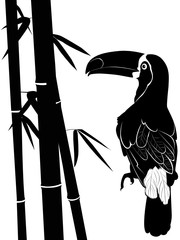 toucan and bamboo