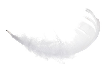pure isolated white feather