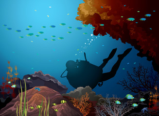 Coral reef and diver.