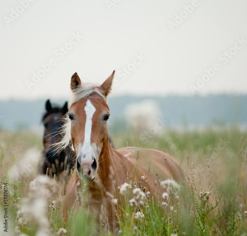 horses in field - 58376514