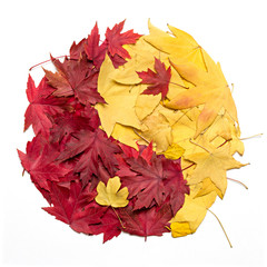 Yin Yang symbol made with autumn leaves