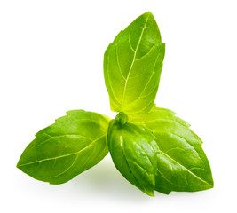 Basil. Leaves isolated on white background
