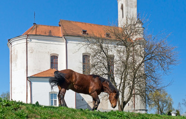 A chestnut horse with a church on the background
