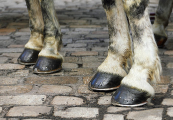 Two pair of white horse hooves on a block pavement