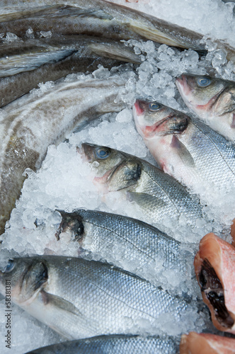 Variety of fresh fish on iced market display, vertical shot