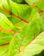 Fresh green chard salad background