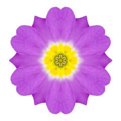 Purple Kaleidoscopic Primrose Flower Mandala Isolated on White